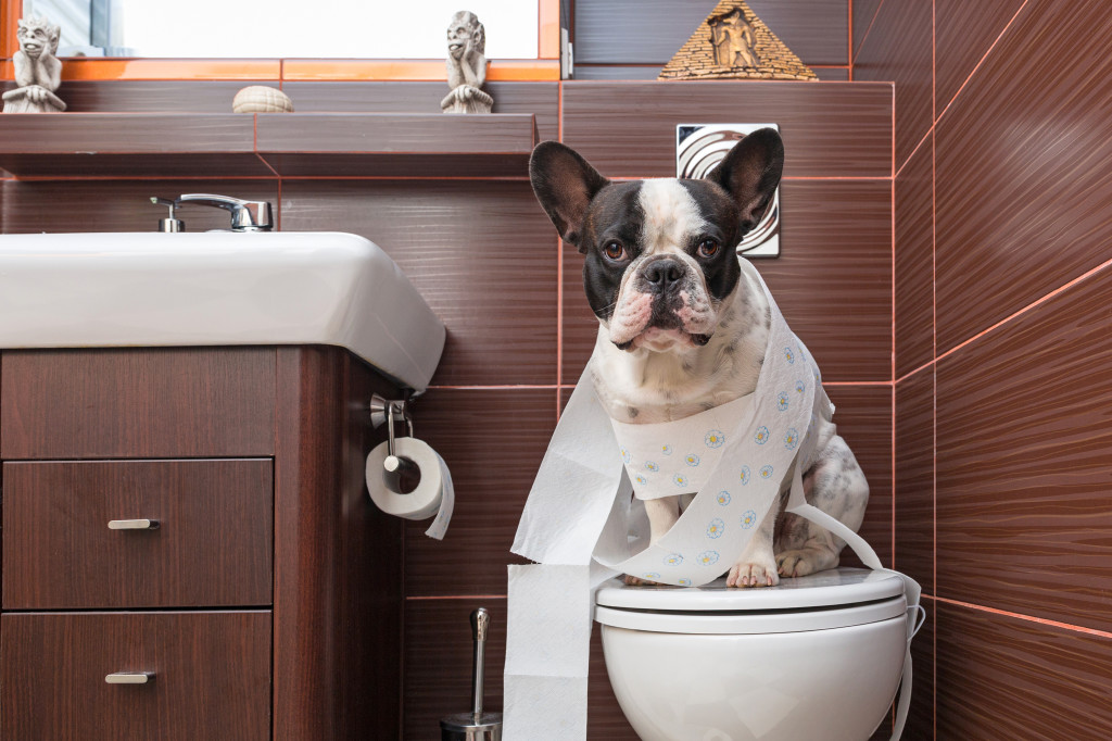 Housetraining An Adult Dog Potty Training For The Stubborn Dog Dogspring Training