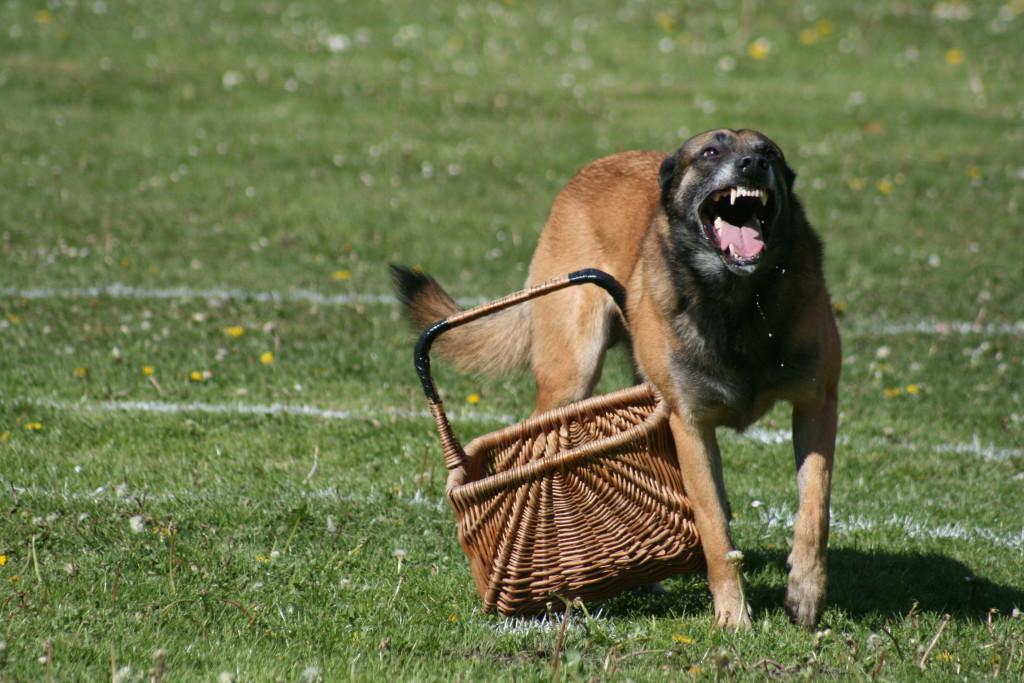 Dog Training Toy Guarding