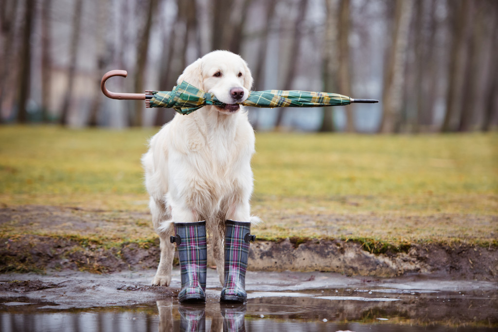 8 Ways to Stay Sane When It Rains: Avoiding Crazy Wet Dogs ...